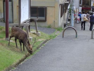 鹿①.jpg